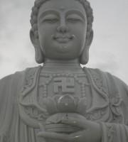tuong-adida (3)